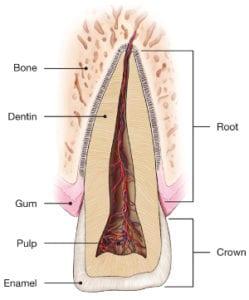 Traumatic-Dental-Injuries-249x300-1
